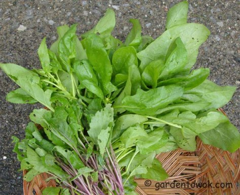 Spinach, hot tsai tai