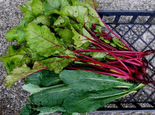 Kale and beets