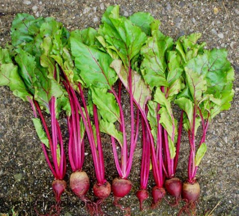 Beets, Detroit dark red