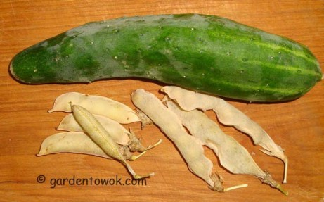Cucumber and dried peas (5379)