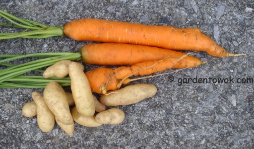 Carrots & fingerling potatoes (5571)