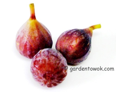 Figs (5617)