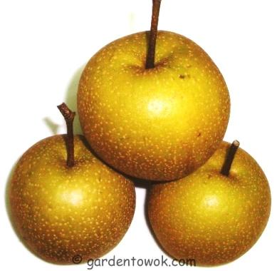 Asian pear (5636)