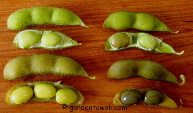how to cook green soybeans