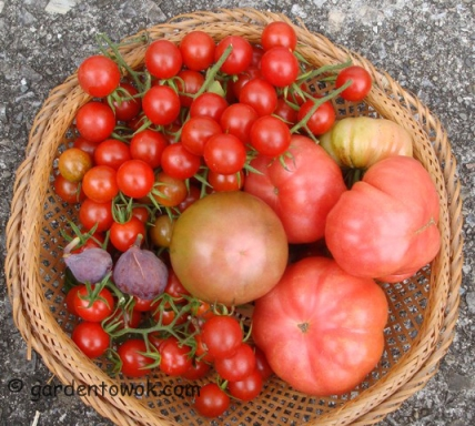 Tomatoes & figs (5724)