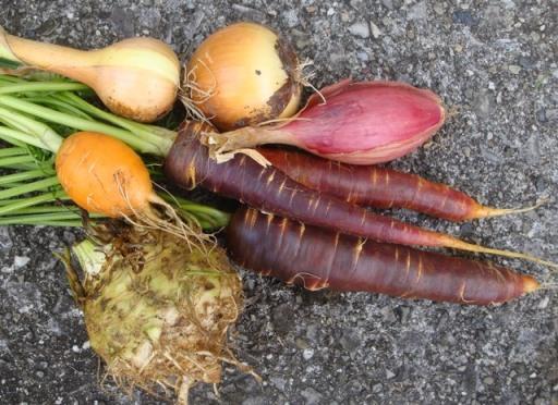 Fall veg harvest (5770)