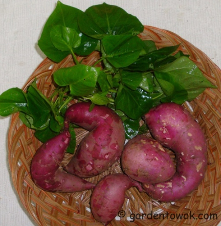 Purple sweet potato (5863)