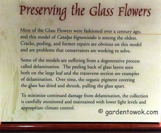 Preserving the glass flowers