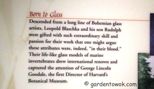 History of the glass flowers