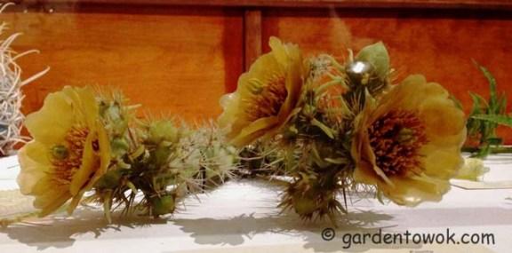 Cactus 2013-1125_1343  IMG_0952weblarge copy