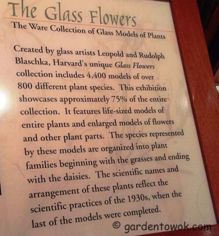 The glass flowers