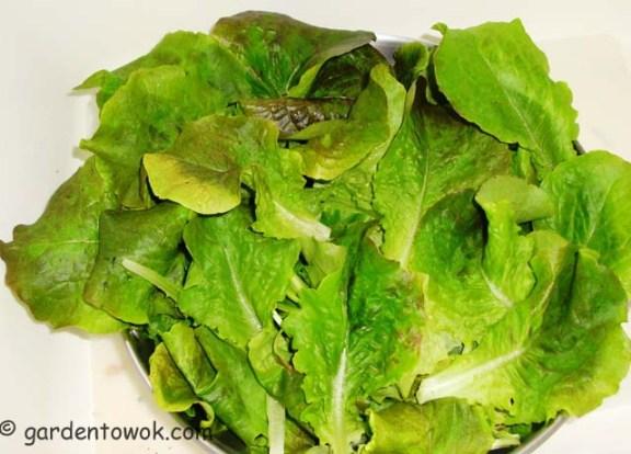 Leaf lettuce (06110)