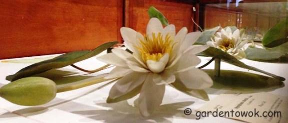 Water lily 2013-1125_1351  IMG_0985weblarge copy