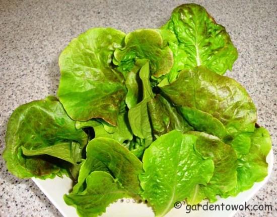 Lettuce (06119)