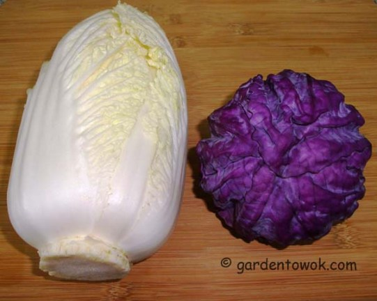 Napa cabbage & red cabbage (06182)