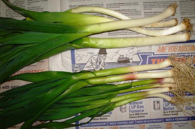 Leeks & garlic green (06374)