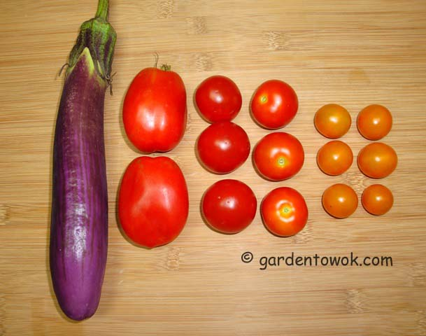 eggplant & tomato (06560)