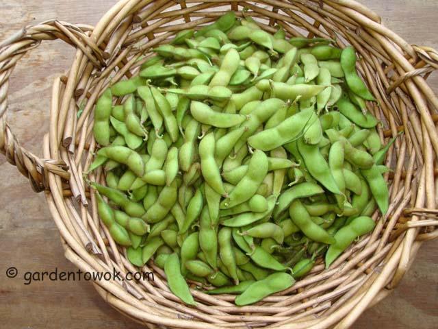 black soy beans (06666)