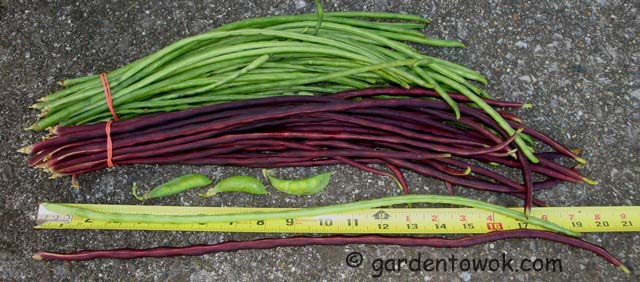 Chinese long beans (06719)