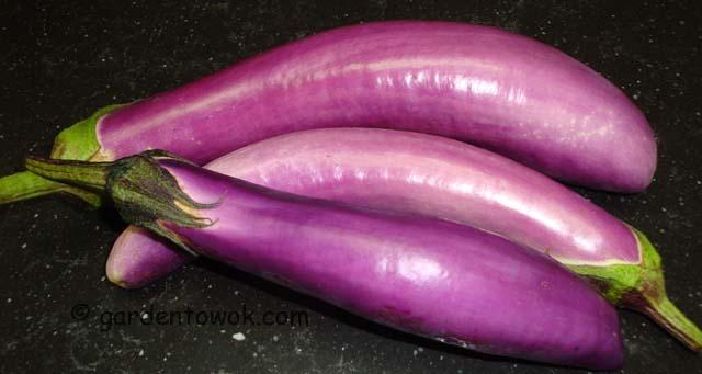 Ping Tung eggplant (06731)