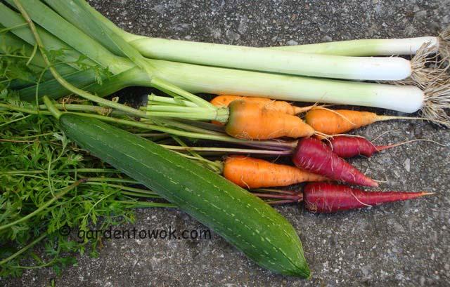 leeks, carrots & luffa (06742)