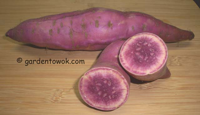 purple sweet potato (06752)