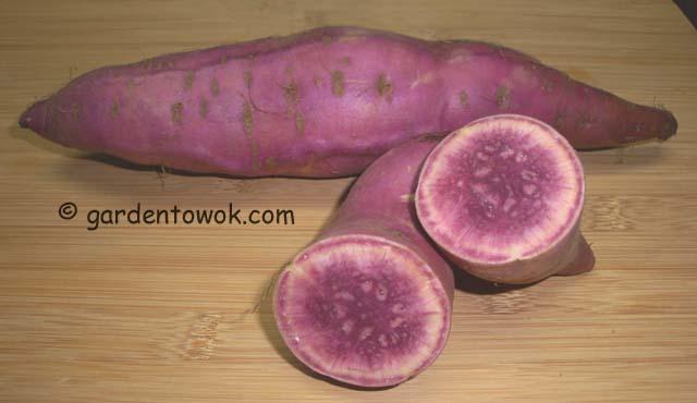 purple sweet potato (06752)