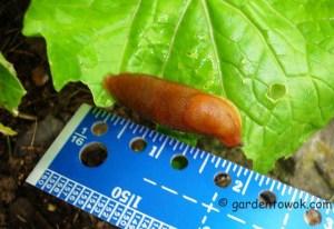 slug (06806)