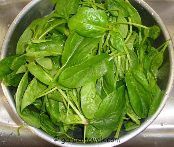 window box spinach (06826)