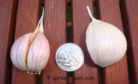 garlic cloves (06990)