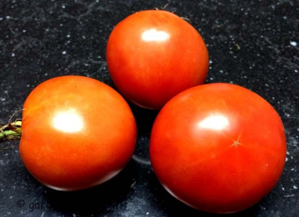 brandywine tomato (IMG_0598)