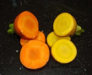 carrot cross section (06732)