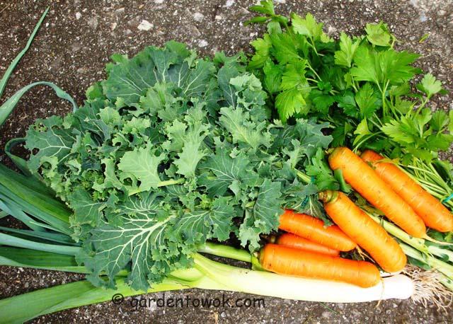 leeks, kale, carrot & parsley (07060)