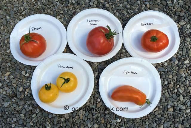 Locust Grove's tomatoes (IMG_0527)
