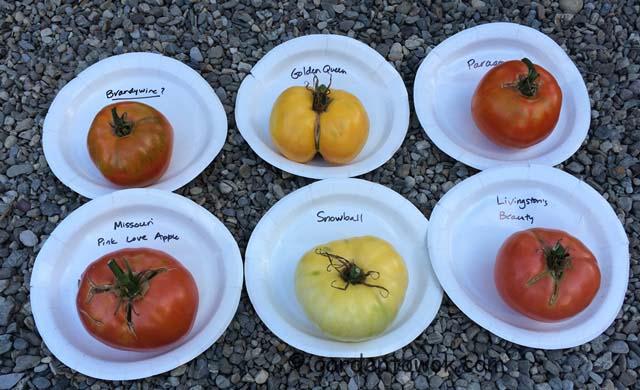 Locust Grove's tomatoes (IMG_0532)