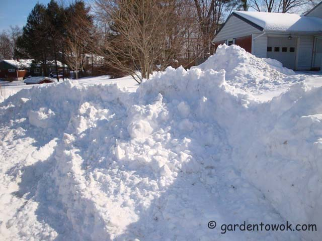snow pile by driveway (01763)