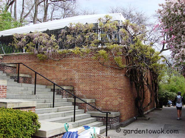 central park's conservancy garden (05674)