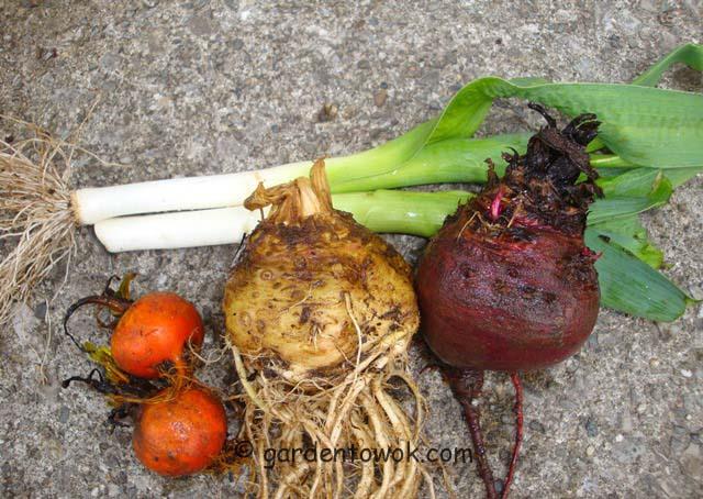 overwintered root crop (07401)