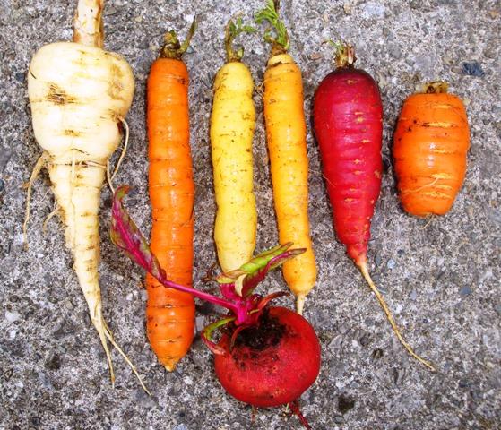 parsnip, carrots & beet (07474)