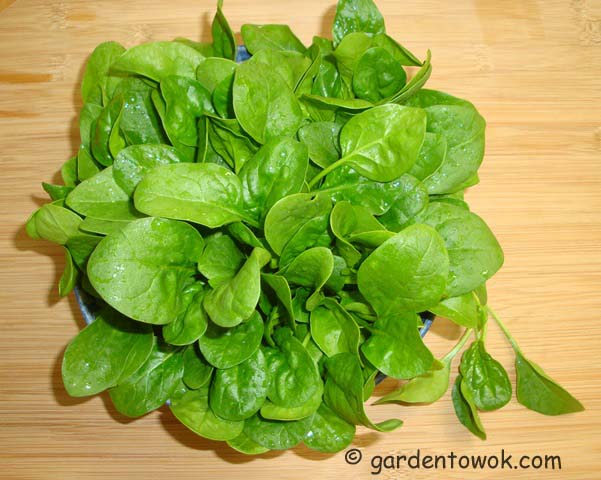 spinach (07491)