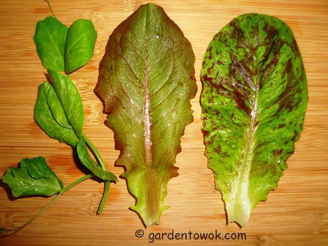 lettuce & pea shoots (07513)