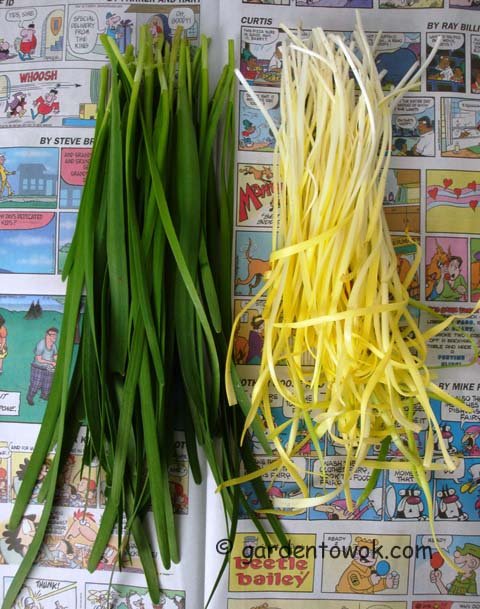 blanched Chinese chives (07529)