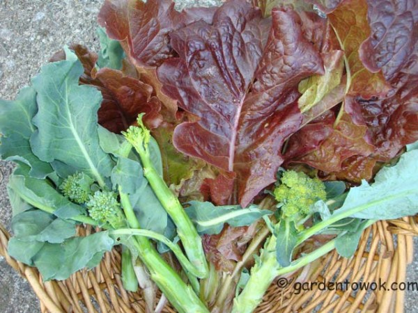 lettuce & broccoli (07921)
