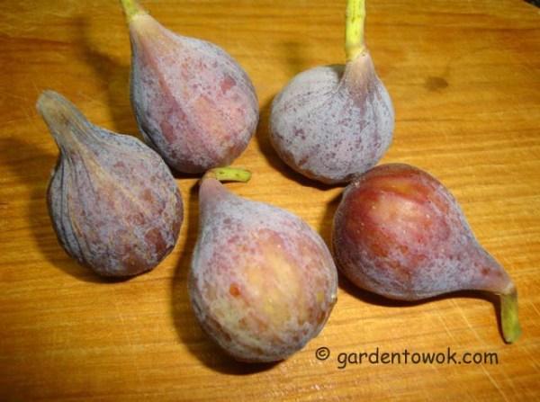 figs (08162)