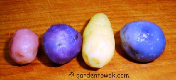 red, white & blue potatoes (08187)