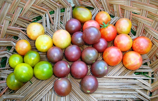 chreey tomatoes (08357)