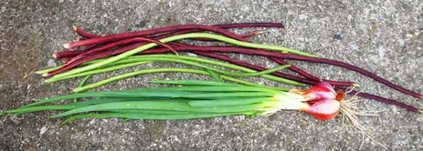 chinese long beans & walking onion (08399)
