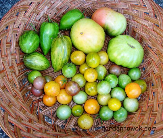 tomatoes (08520)