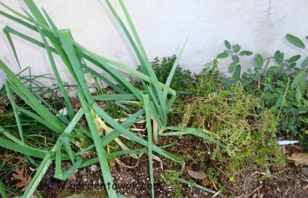 herbs (08739)