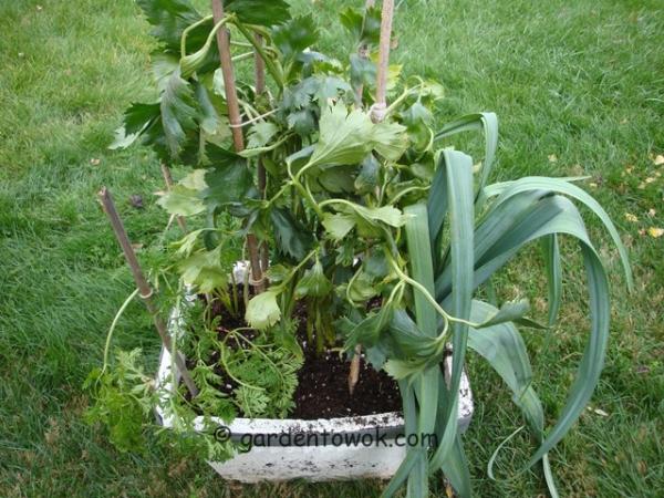 root crops (08749)